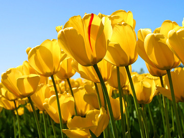 很漂亮的花朵。