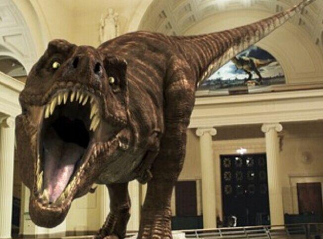 """夜晚的古生物博物馆是怎样的?巨大的合川马门溪龙会不会复活?猛犸象和原始牛会不会打架?前天晚上到昨天早晨,南京古生物博物馆奇妙之夜开启,这一夜,20多位孩子循着生命演化的足迹,在历史和现实中的穿梭,把""""家""""安在恐龙旁边,和恐龙共眠,领略科学的魅力。 在恐龙旁安""""家"""" 等恐龙复活 前天晚上7:00,孩子们来到南京古生物博物馆,随着该馆冯伟民馆长宣布:古生物博物馆奇妙之夜正式开始,20多名孩子就进入到他们的""""奇妙之夜""""。 在历史和现实"""