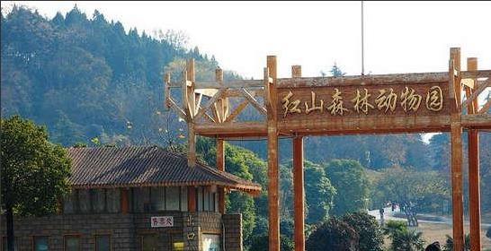 红山动物园将免费发放3.5万张电.